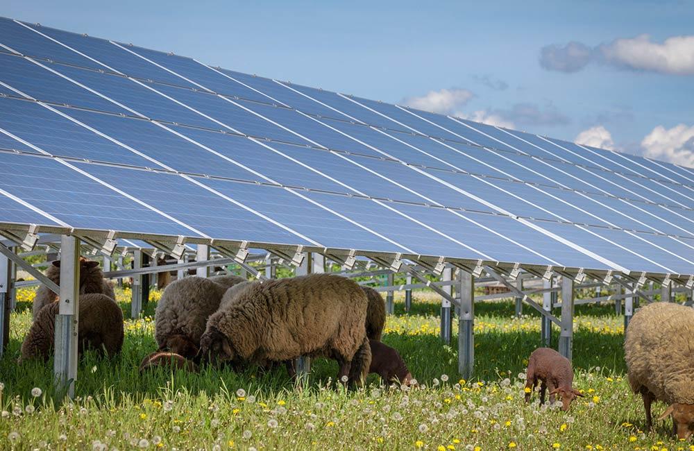 outarky | nachhaltige Energie durch Freiflächen-Photovoltaik